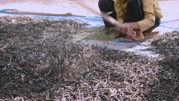manuelles Zerkleinern der getrockneten Bohnen mit einem Holzstab (Nahaufnahme))