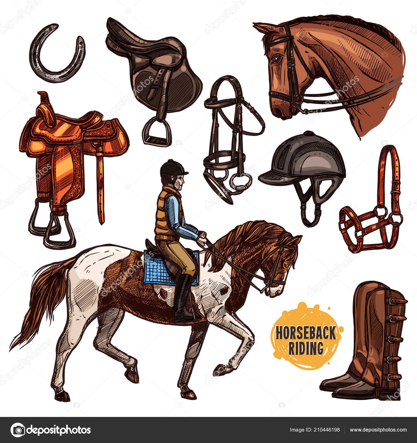 Design Horse Riding Poster Hand Drawn Horse Sketch Illustration Riding Stock Vector C Alexrockheart 210446198