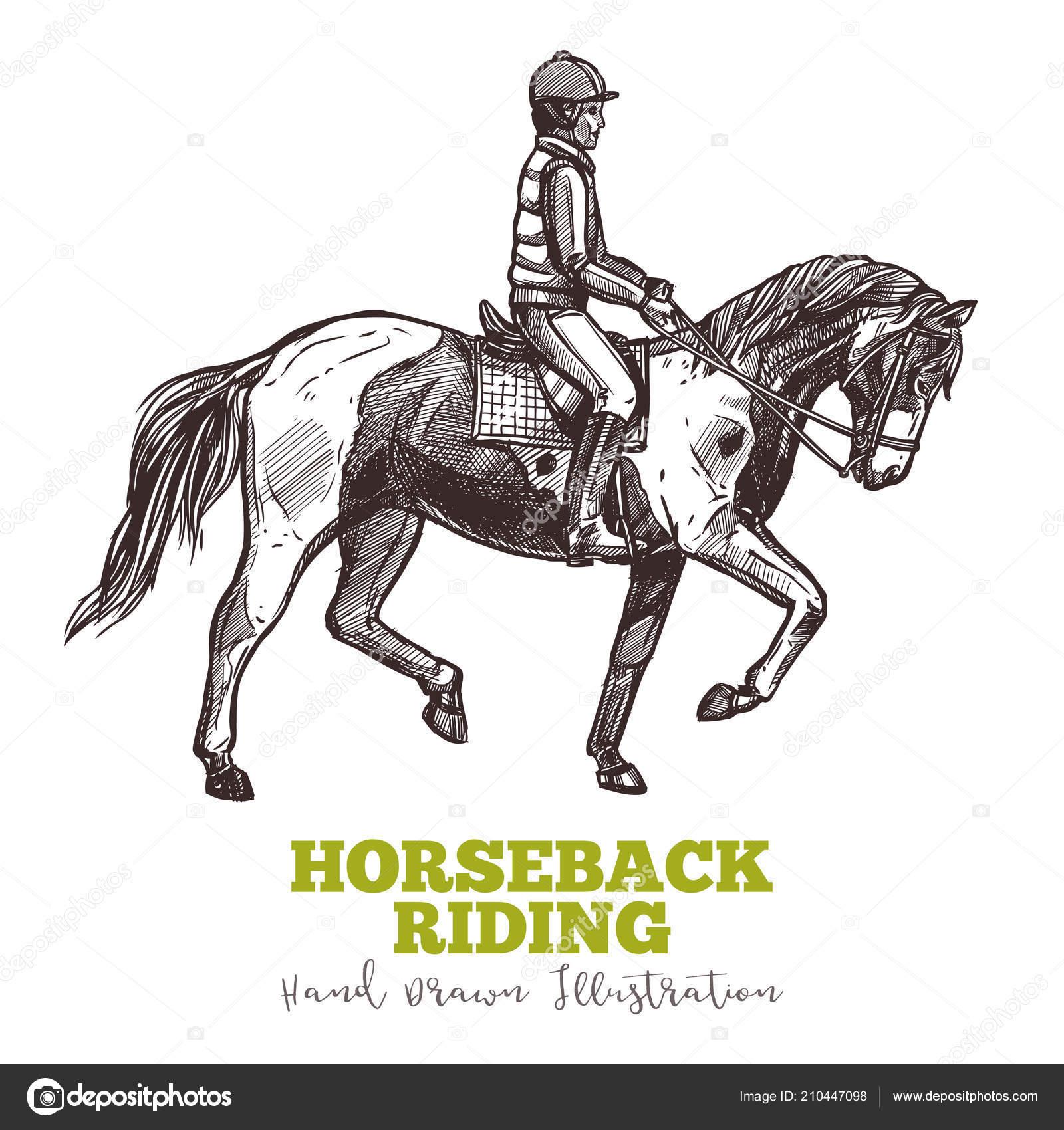 Design Horse Riding Poster Hand Drawn Horse Sketch Illustration Riding Stock Vector C Alexrockheart 210447098