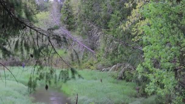 posouvání dolů skrze stromy vítr a trav na bazény