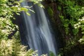 cascata che cade dietro le foglie di acero e felce