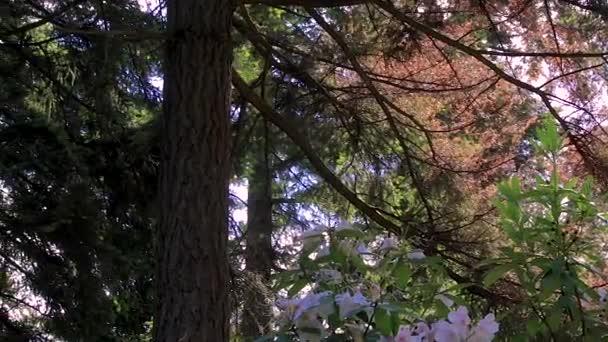 Díky borovice na barevné větve
