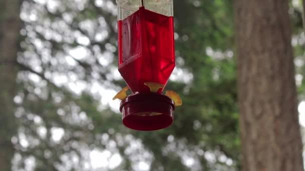 kolibříkovi létání pod krmítko