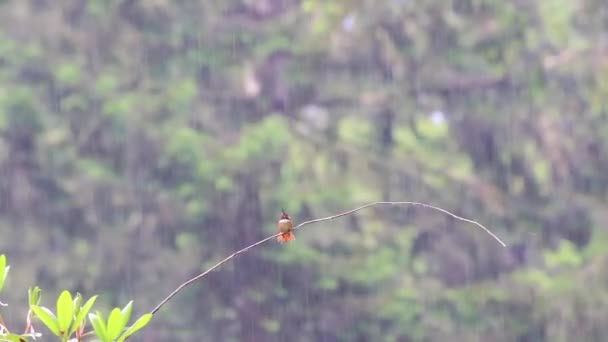 pobrukoval si pták sedí na větvi