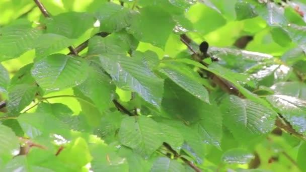 dešťové kapky nalil přes listy