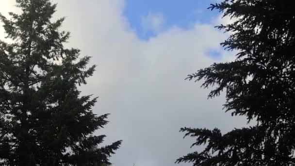 Stromy ve větru