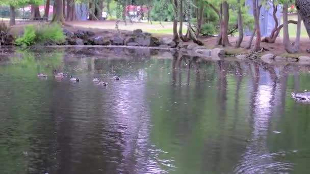 park pond with ducks