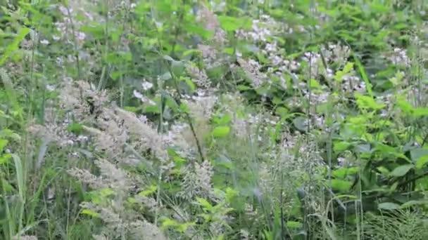 vysoké trávy a plevele