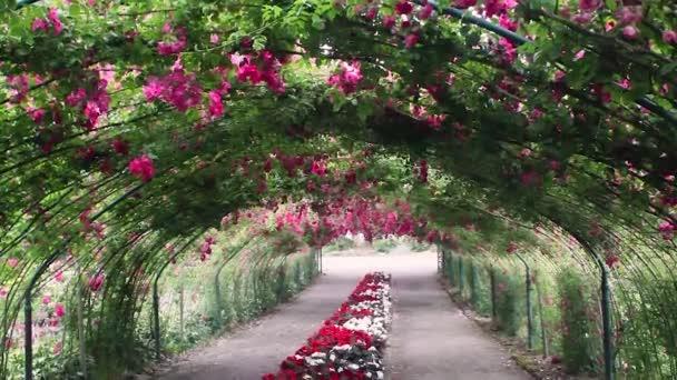červené růže podloubí pro posouvání