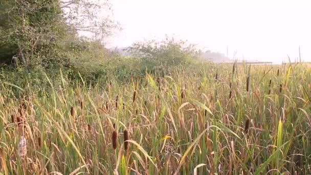 vizes marsh a washington a hood-csatorna mentén