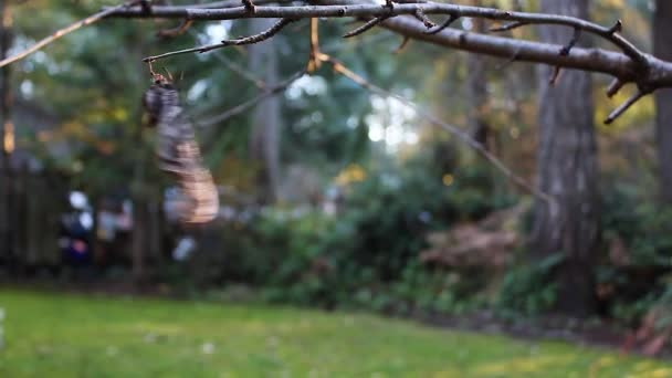 egy szeles napon egy fa végtag kapaszkodva halott elszáradt levél