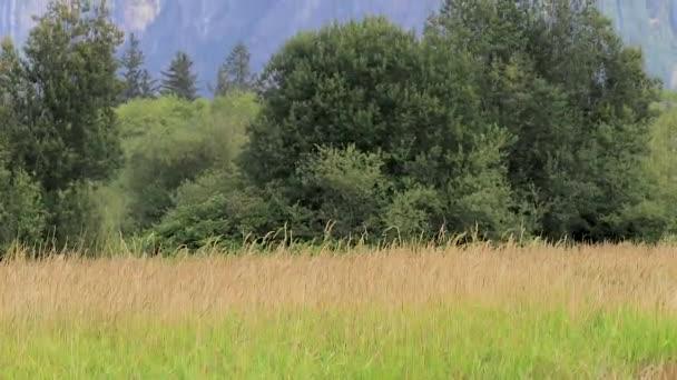 posun od lesa základní na horské vrcholy v snoqualmie washington