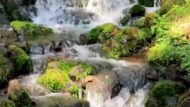posouvání nahoru vodopádem deštný prales