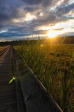 long wooden boardwalk streching far across lush green wetlands below a bright cloudy sunset