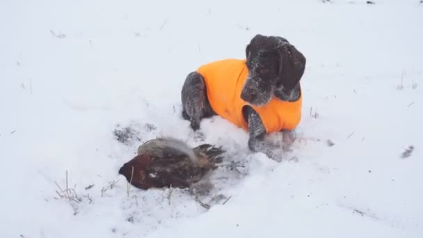 Hunting trained dog caught a bird