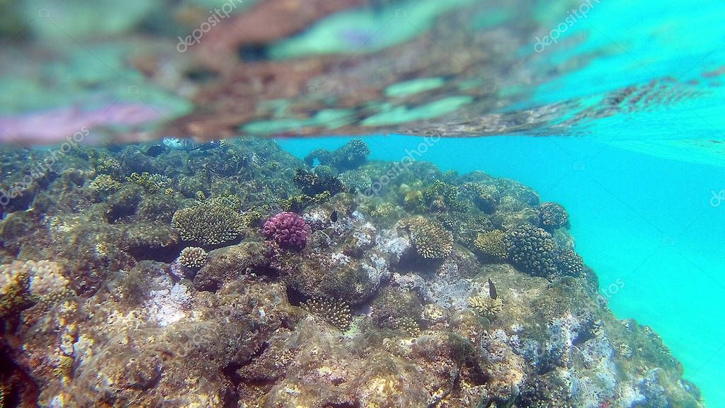 Fish-surgical Akantnuridae, Seabreams and swim around a bright colored coral reef in the Red Sea in Hurghada, Egypt, sunlight, waves, under water.