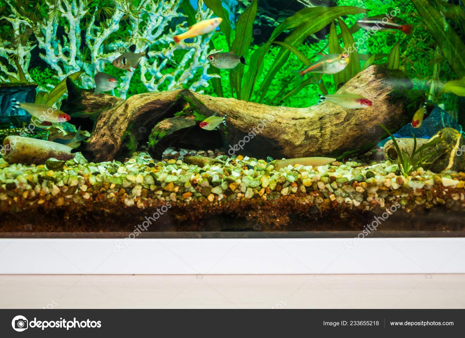 Fragment Home Aquarium Decorations Mangrove Snags Stones
