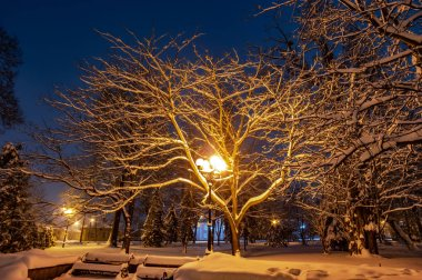 Snow covered trees at night in a park