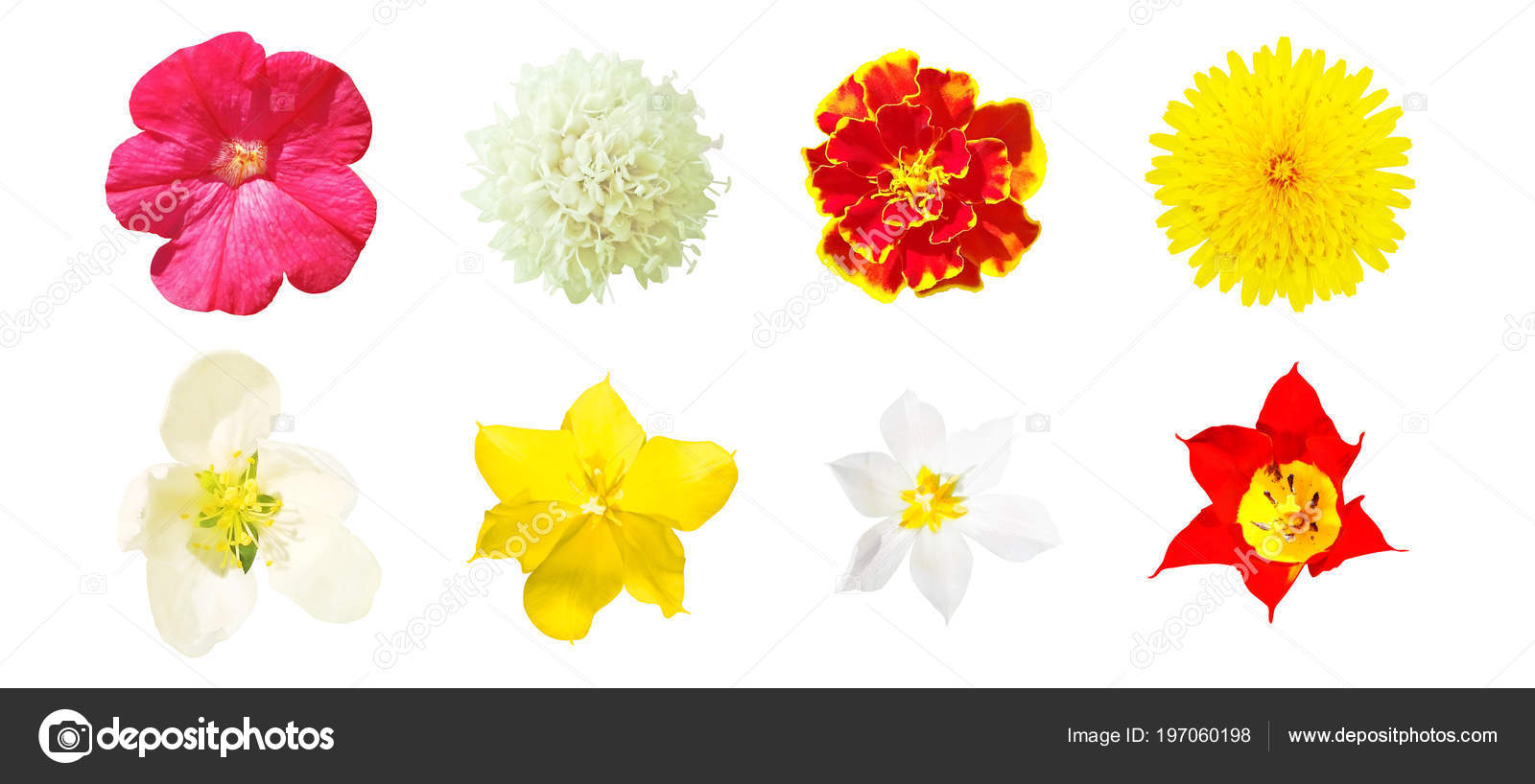 Set Top View Wild Garden Flowers Isolated White Background