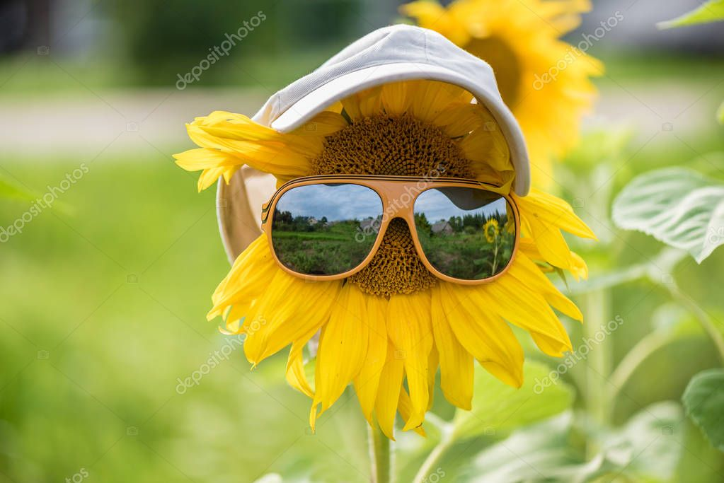 Sunflower with glasses and a cap on the field
