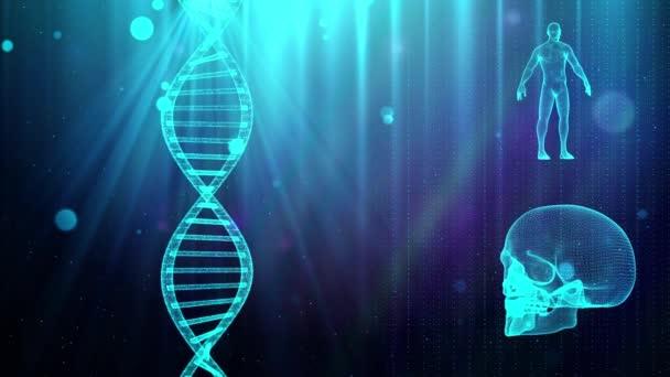 medizinischer Hintergrund mit DNA-Strang Schädel und menschlichem Körper