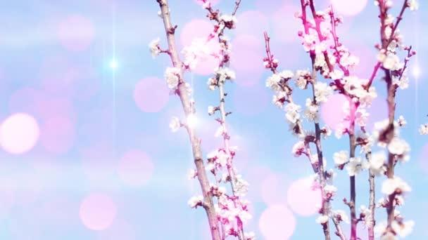 Kvetoucí stromy na jaře pozadí