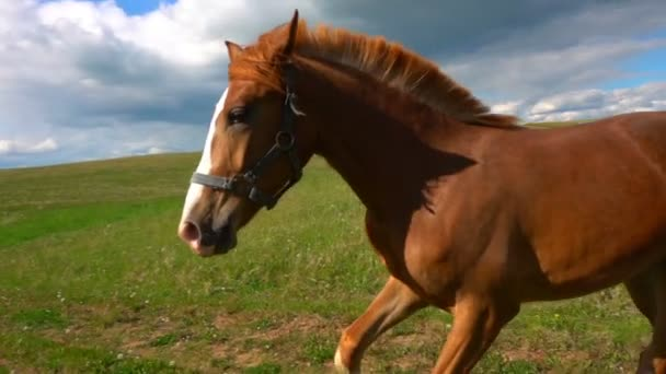 Horses with a foal graze in the field, daytime beautiful landscape, slow motion
