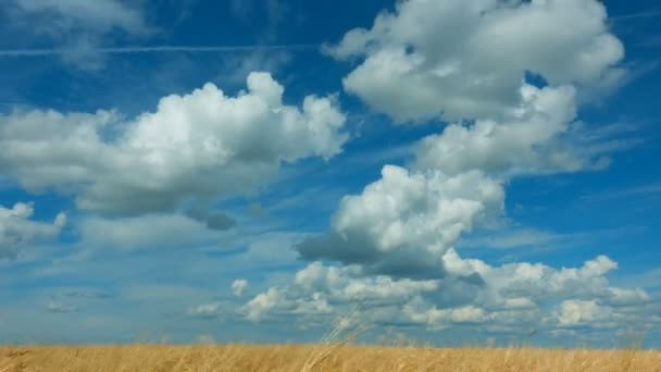 time lapse. Rapid movement of clouds in the summer over wheat fields