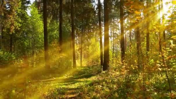 Wandern im Herbstwald, bei warmem, sonnigem Wetter, 4k