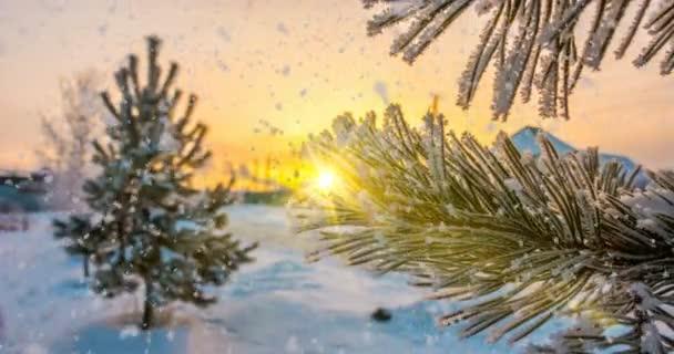 sníh padá na jinovatka borových větvích, zimní vánoční animace