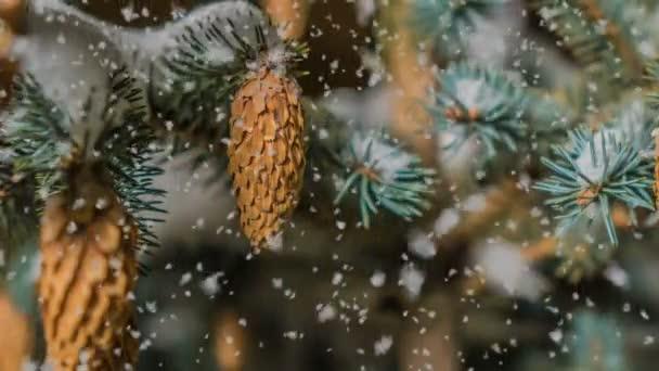 Měkký sníh v zimě zasněženém lese, večerní zimní krajiny, smrkové větve ve sněhu