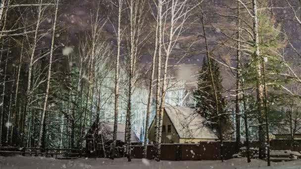 Puha havazás, havas téli erdőben, este a téli táj, fenyő ága a hóban, videóinak hurok