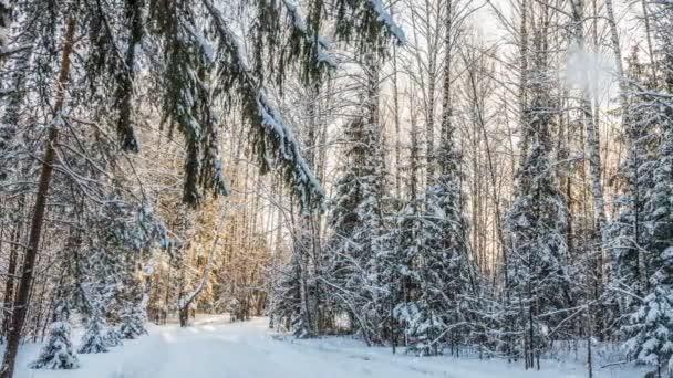 Zimní krajina s nádherným sněhem a zapadajícího slunce.