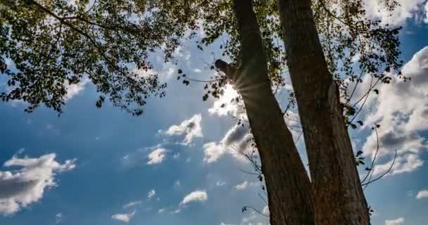 čas s podzimním stromem, slunce svítilo korunou stromu, krásnou krajinou