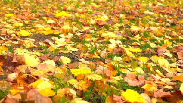City park in autumn time, sunlight, autumn colors in city