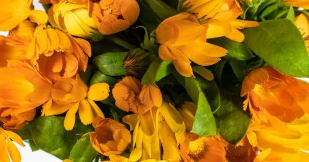 Časový interval kvetení květin na černém pozadí.