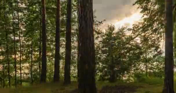 Grünwald. Kiefernwald. Bäume mustern. Kamerabewegung im Wald. Wunderschöner grüner Bergwald im Sommer