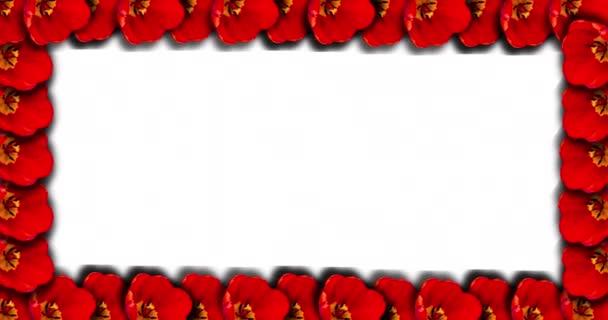 Téglalap alakú képkeret fénymásolási képekhez vagy szövegekhez. Egy rózsaszín tulipán virágzásának időeltolódásával a keret vonalán..