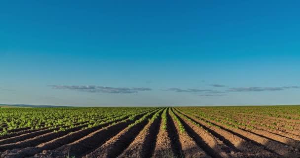 Čas plyne mraky nad krásným bramborovým polem