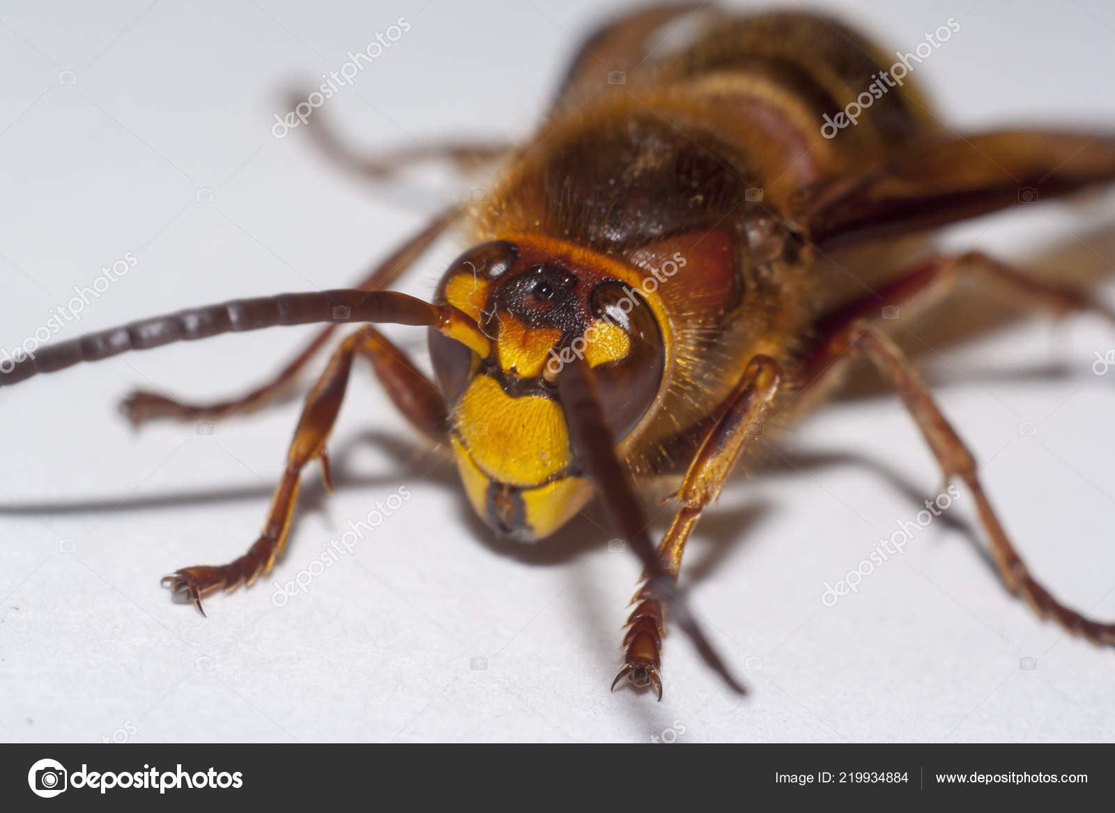 Remove blueyallerhornet. Click-the-download. Pw (virus removal guide).