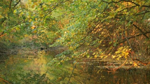 Řeka říční Delta v záplavě lesa a nížinách, chráněná krajinná oblast Litovelske Pomoravi, celosvětové momokní teritorium, padající listoví hezkého barevného podzimu 4k
