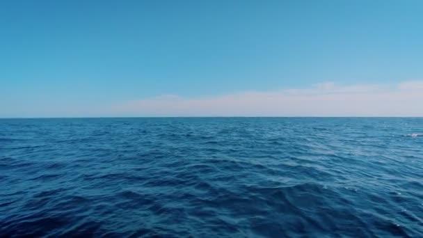 Delfíni vedle plachetnice, vyskočí v oceánu