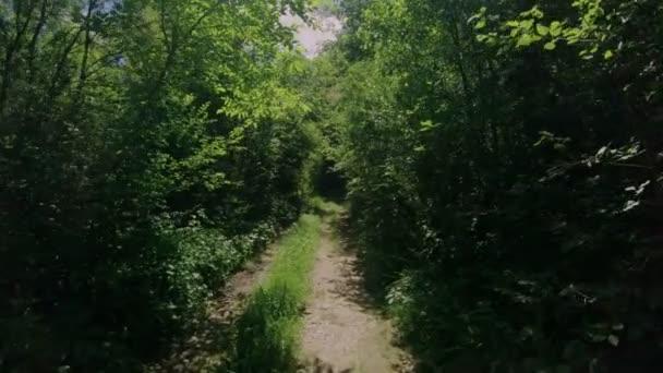 Stezka nebo cesta v tmavě zelený Les