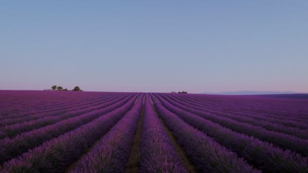 Epic drone shot from birds point of view over sunrise or sunset on lavender fields in rural provence french province, beautiful travel tourist destination for inspiring wanderlust moments