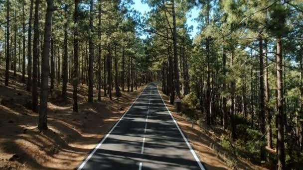 Drone lövés kiderül, epikus gyönyörű erdei út
