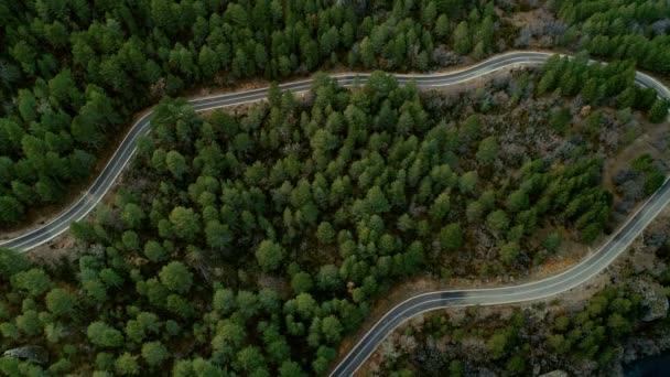 Static drone top view shot of road in forest