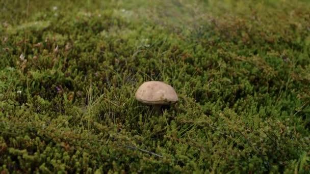 Gardener or traveller picks up wild mushrooms