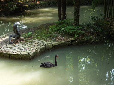 A black swan is swimming in a pond on background of a sculpture of a sitting boy. Park Arboretum. Russia Sochi 06 23 2019