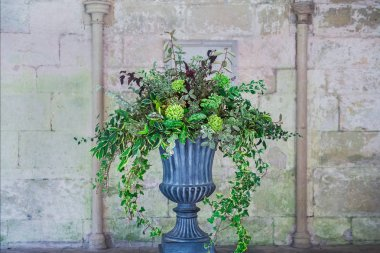 Stone vase planter with fustian green flowers and cascading green ivy and leaves. Grey cobble stones. Gorgeous design in front of medevial wall with coloumns. Selective fovus, copy space