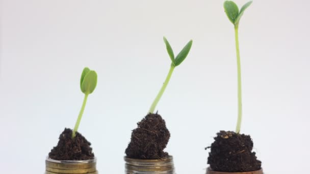 Green plants falling. Golden coins. Falling market, financial crisis crash concept.